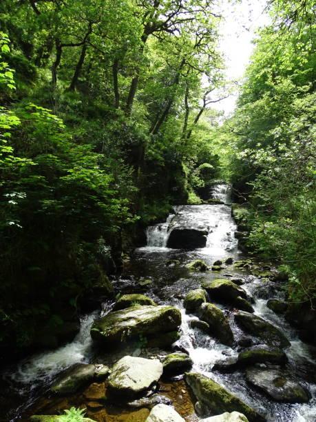 fiume che cade su una cascata rocciosa attraverso una foresta - forest bathing foto e immagini stock