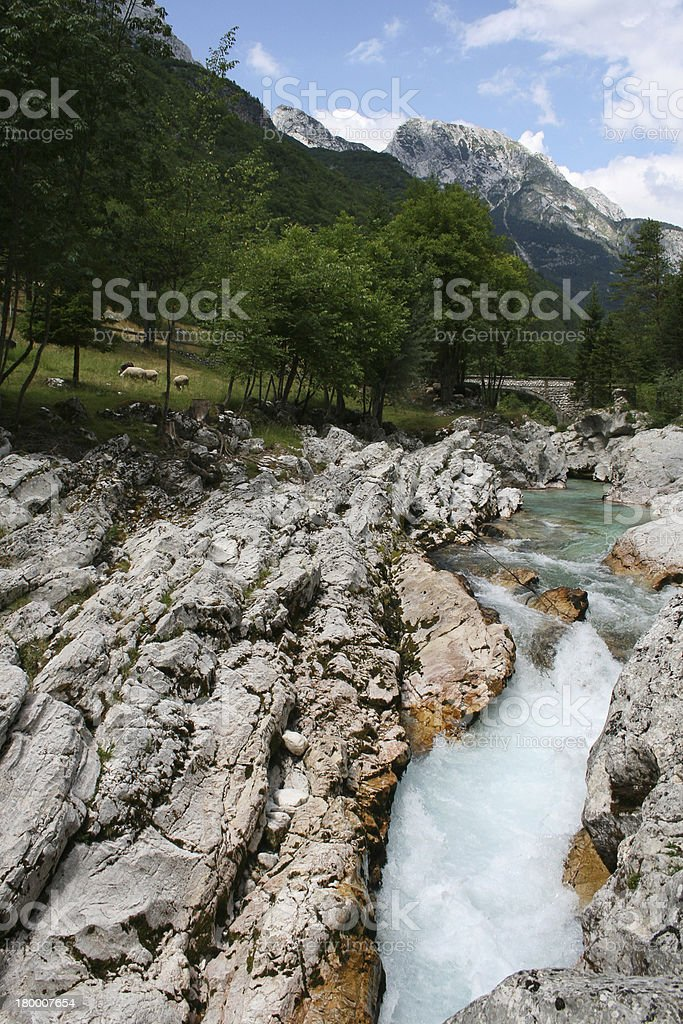 River, turquoise water, green trees and sheeps royalty-free stock photo