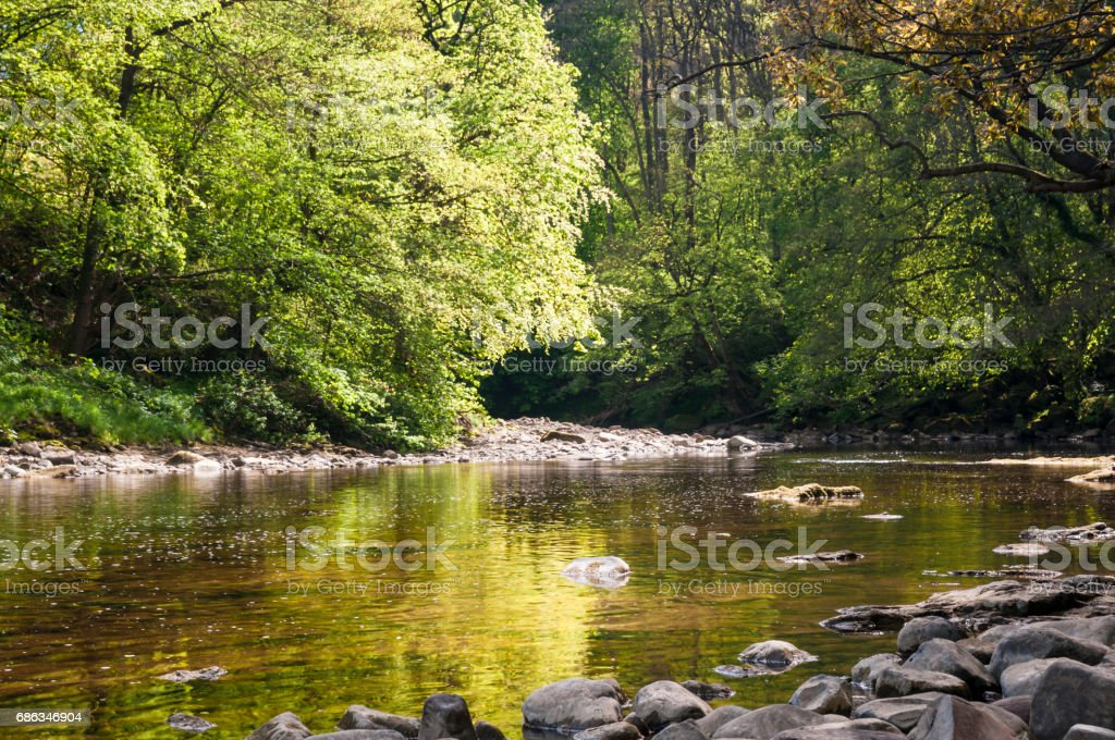 River Ure trees stock photo