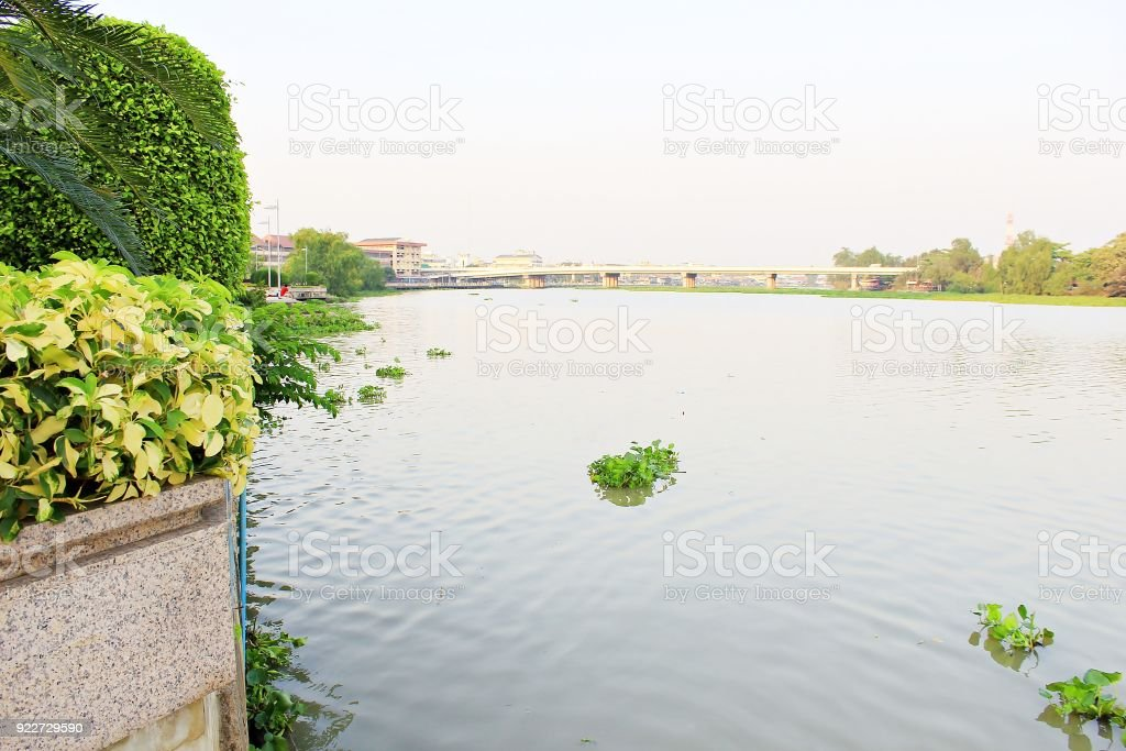 River view with water hyacinth floating stock photo