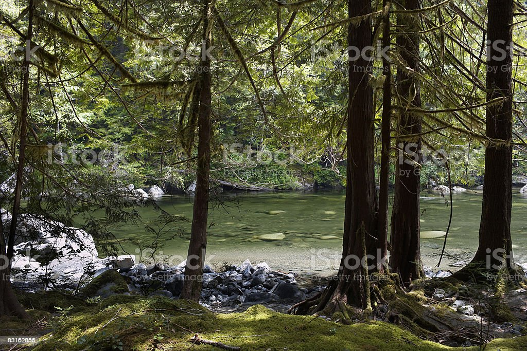 Río s'observa a través de un bosque. foto de stock libre de derechos