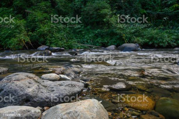 Photo of River Water Flowing in the Tropical El Yunque National Forest in Puerto Rico