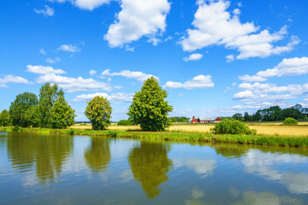 River with trees in a rural landscape view in summer River with trees in a rural landscape view in summer riverbank stock pictures, royalty-free photos & images