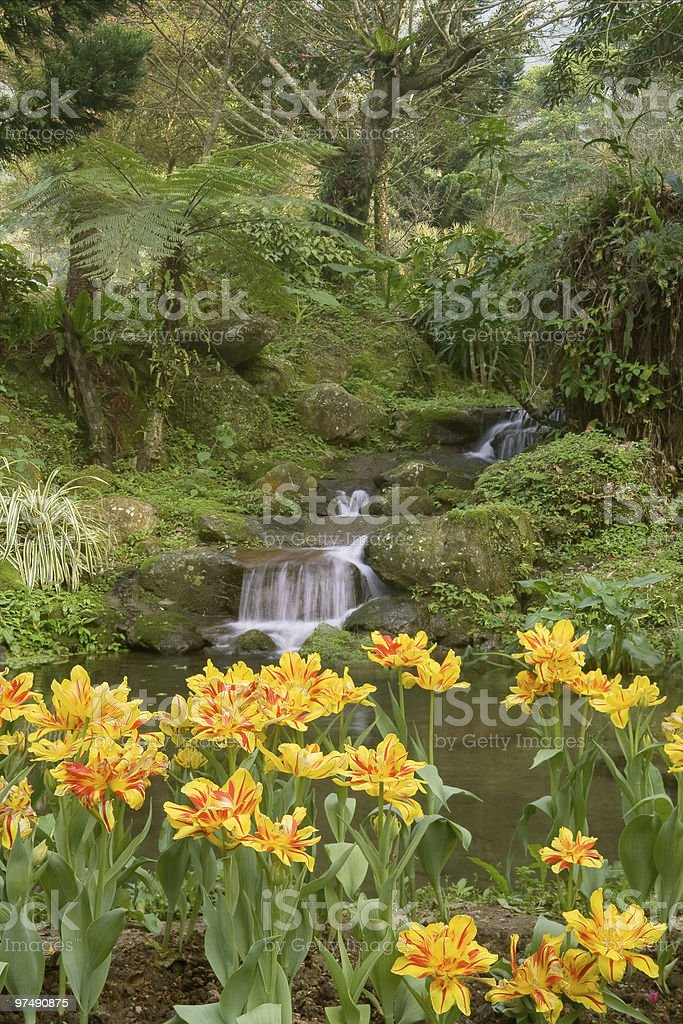River with tulip royalty-free stock photo