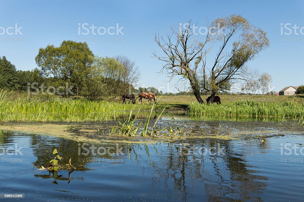 River Wkra, Poland royalty-free stock photo
