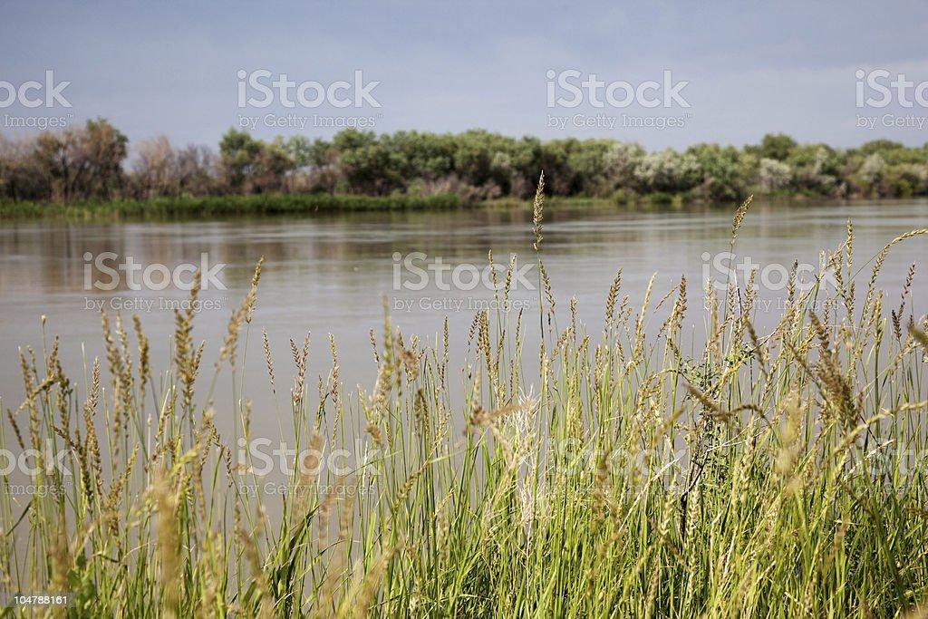 Riverside grass blowing stock photo