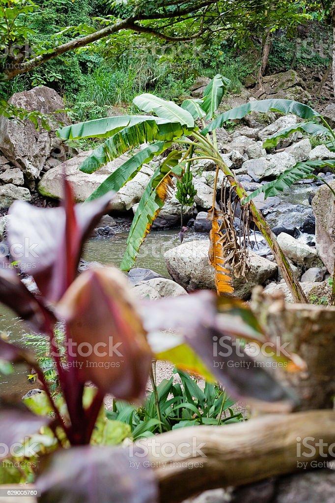 Riverside Plants in Nicaragua stock photo