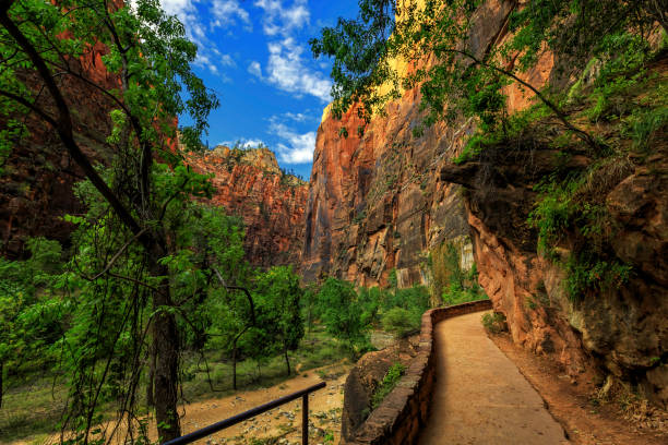 Riverwalk to the Narrows The Riverwalk Trail to the Narrows at Zion National Park zion national park stock pictures, royalty-free photos & images