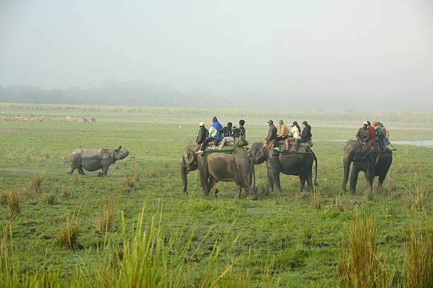 Rlephants and Rhino stock photo