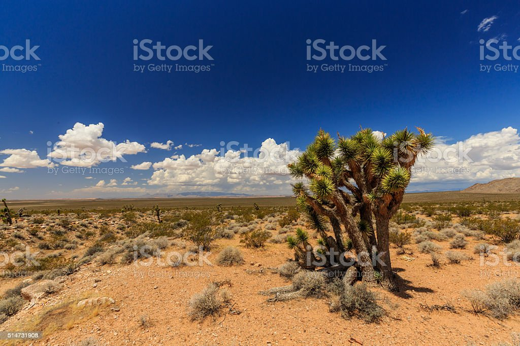Road 1005, Littlefield, AZ 86432, USA stock photo