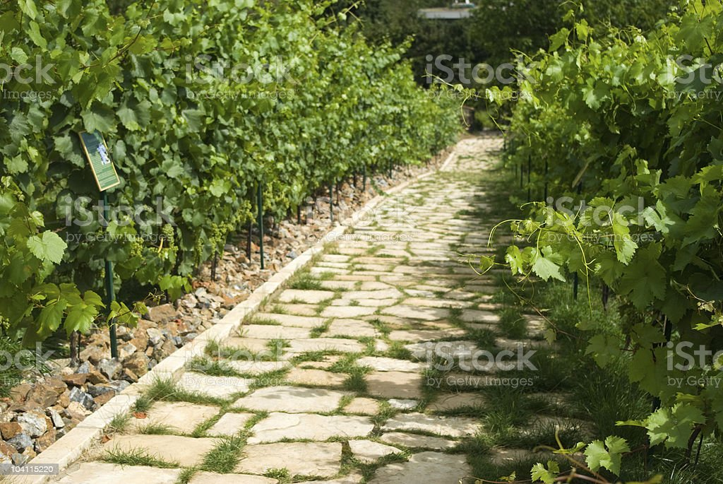 Road across vineyard in Prague royalty-free stock photo