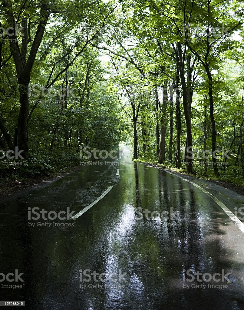 Road after the rain royalty-free stock photo