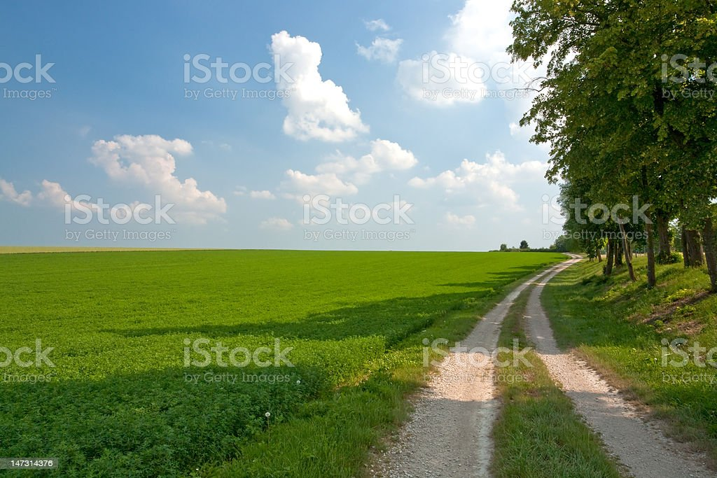 road along lucerne field royalty-free stock photo