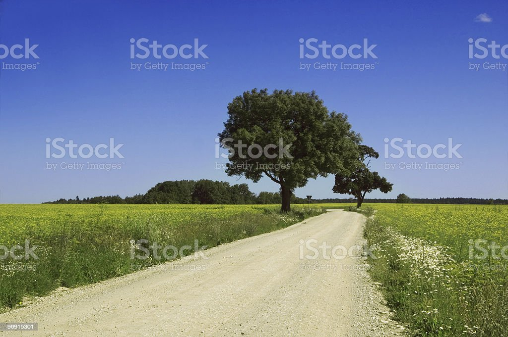 Road among a field royalty-free stock photo