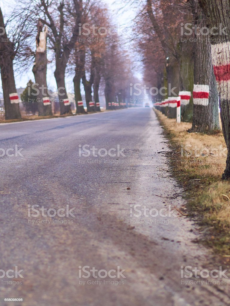 road among the trees royalty-free stock photo