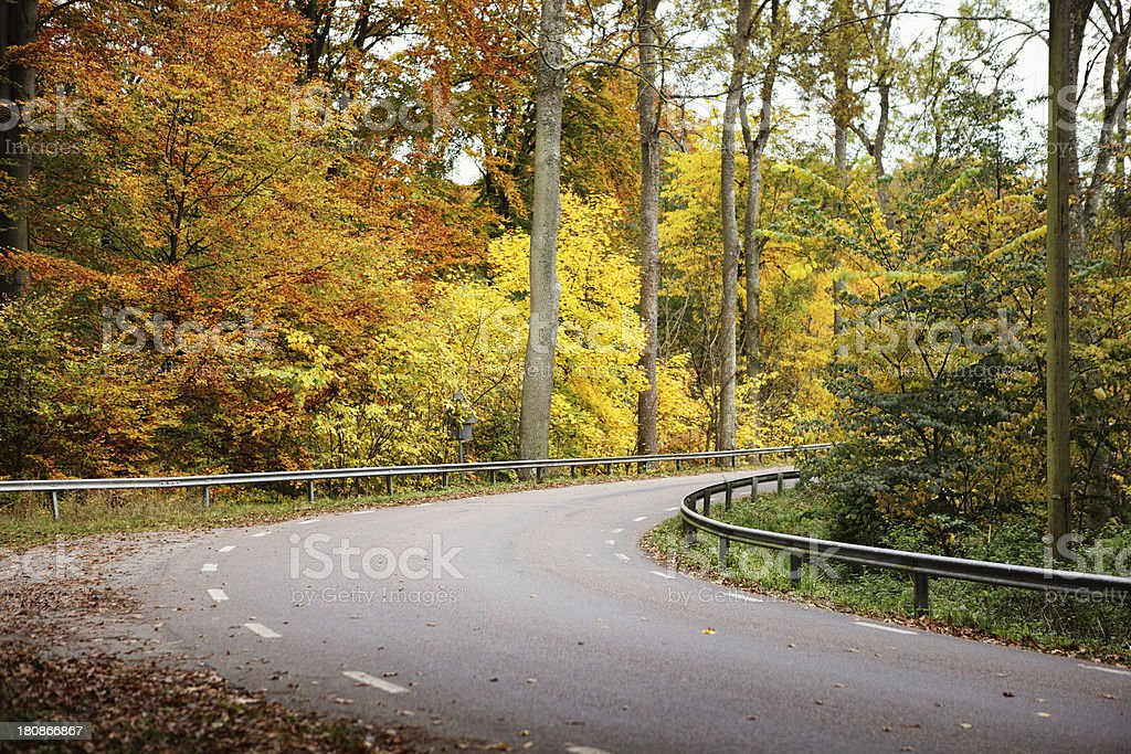 Road and Autumn trees royalty-free stock photo