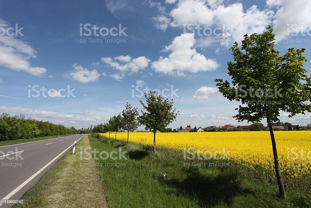 Road and rape field stock photo