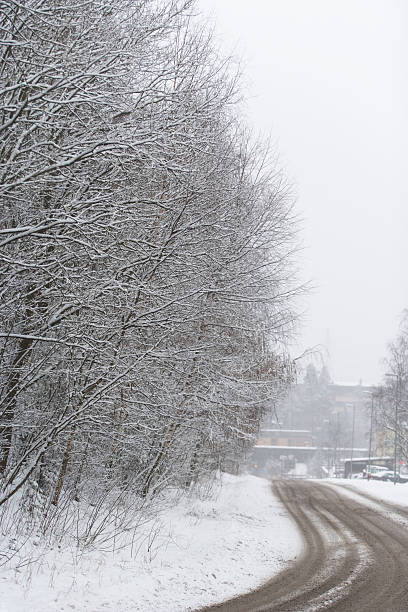 Road and trees in winter stock photo