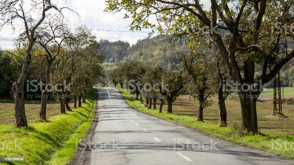 Road and trees stock photo