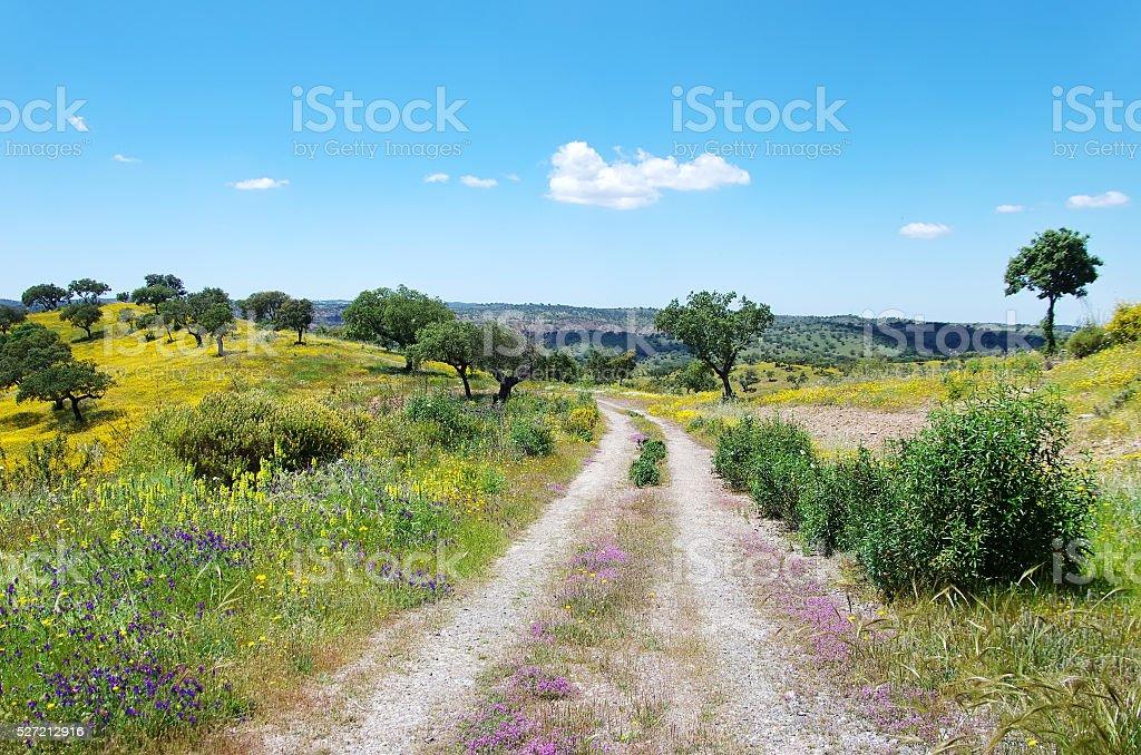 Straße im blossom field, alentejo, Portugal. – Foto