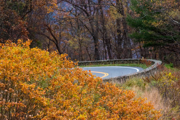 Road at Fall Time stock photo