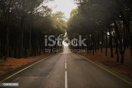 A road crossing a pine tree forest