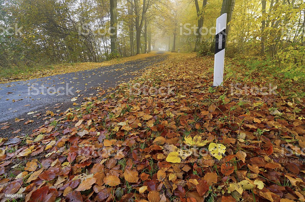 road, autumn, fog, foliage stock photo