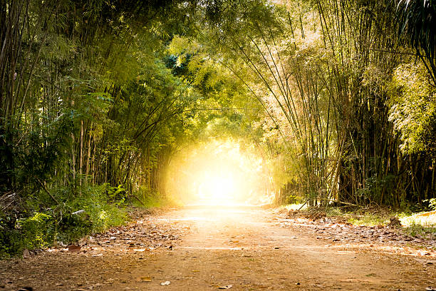 road bamboo forest and light at the end of tunnel - Photo