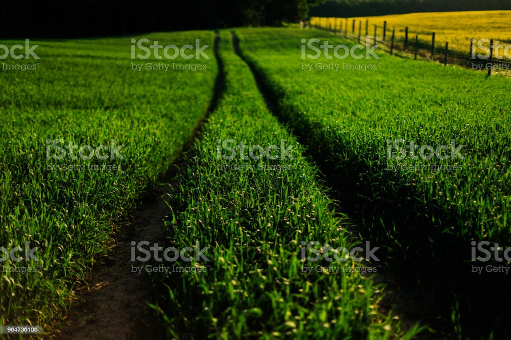 Road between beautiful fields royalty-free stock photo