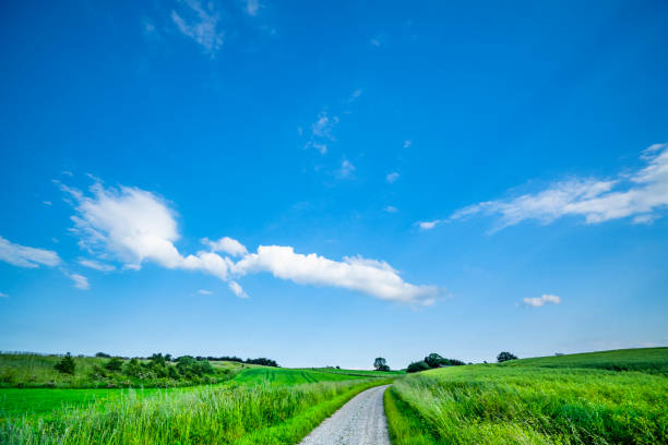 Road between green fields in the summer stock photo