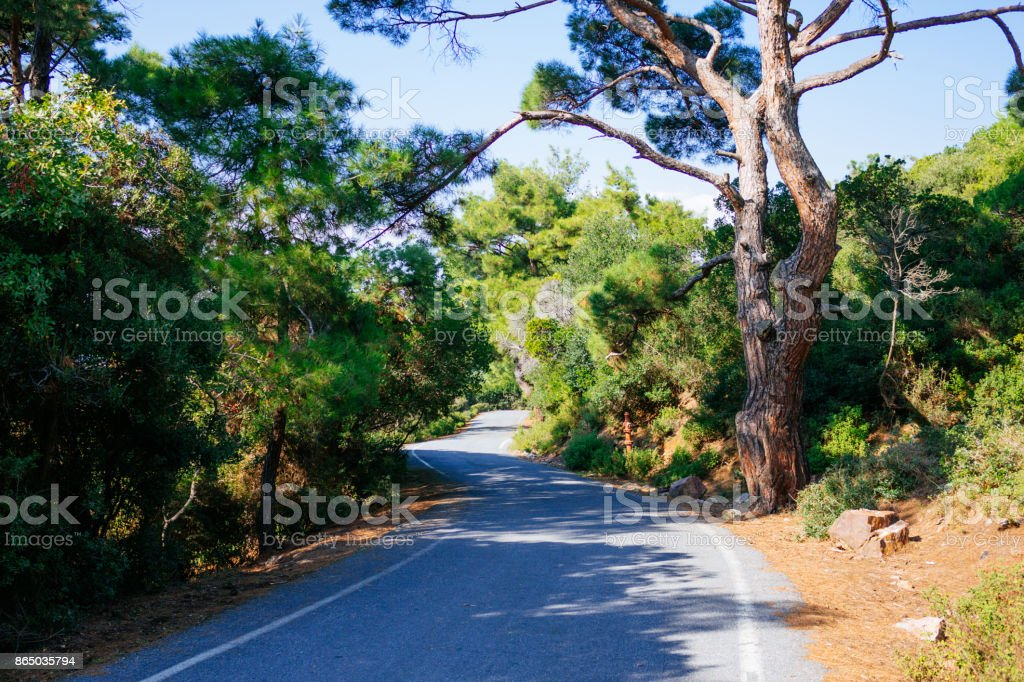 Road bordered by trees stock photo