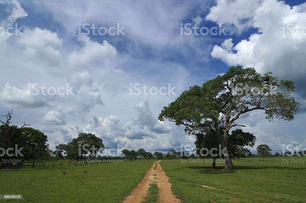 Road by The Pantanal royalty-free stock photo