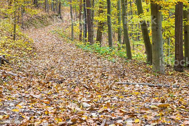 Photo of Road covered with dry leaves in beautiful autumn forest