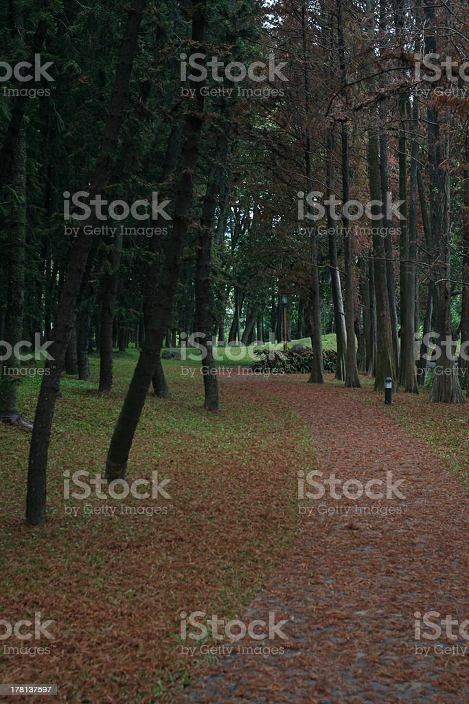 Road  covered with fir leaves royalty-free stock photo