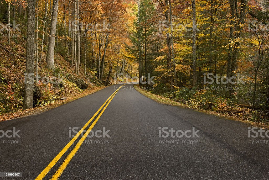 Road Curve in Rainy Mountain Forest royalty-free stock photo