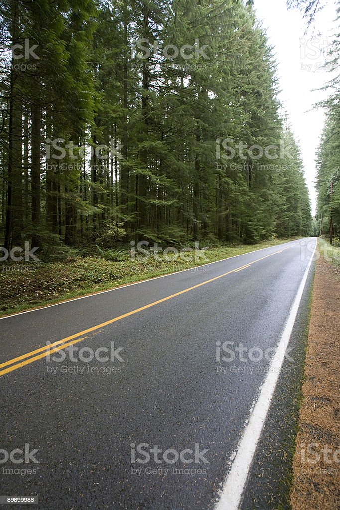 Road cutting through a tall forest royalty-free stock photo