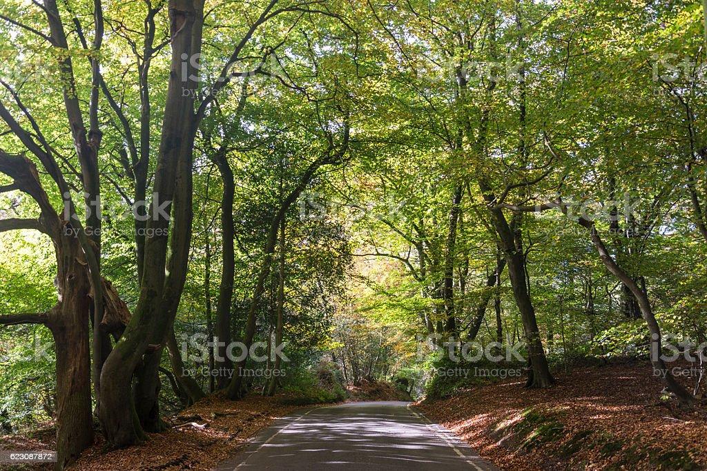 Road going through Box Hill, Surrey, England, UK stock photo