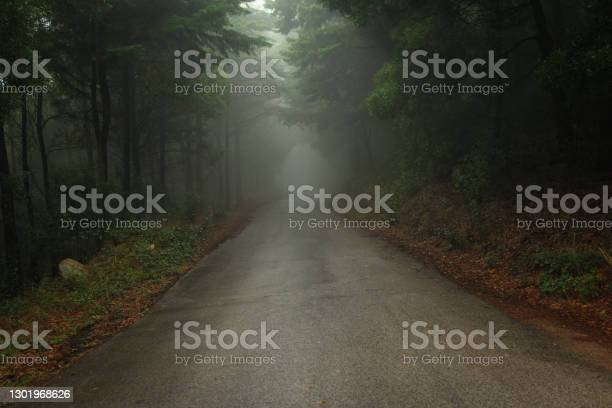 Photo of Road in a forest covered with mist.