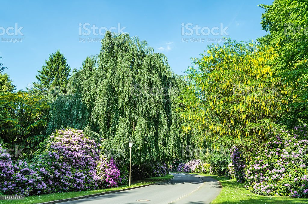 Road in a Park royalty-free stock photo