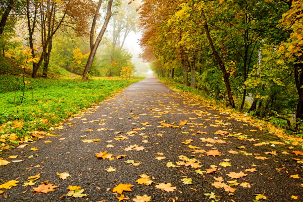 Road in autumn forest. Autumn landscape stock photo