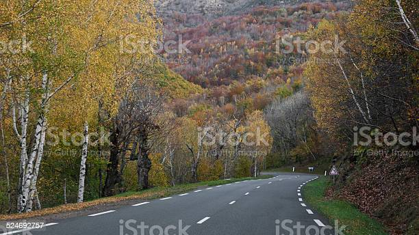 Photo of road in autumn forest