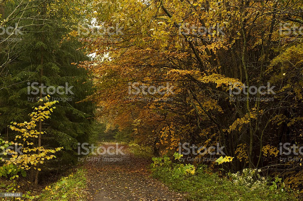 Road in autumn forest royalty-free stock photo