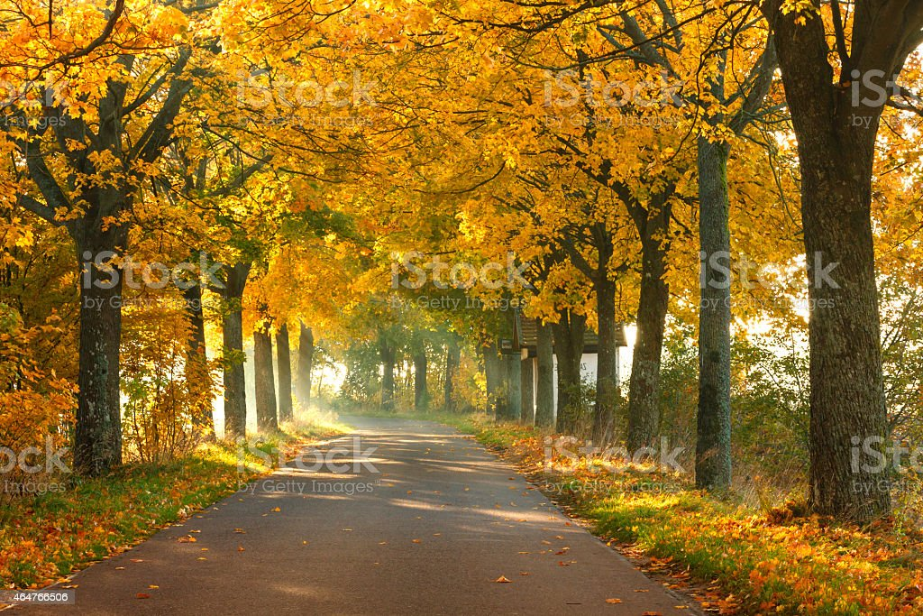 Road in Autumn stock photo