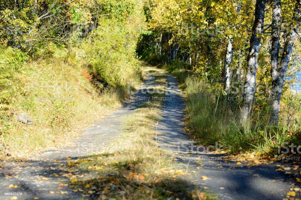 Road in autumn zbiór zdjęć royalty-free