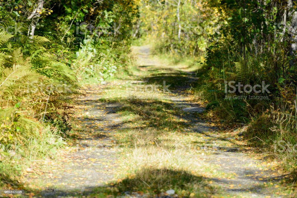Road in autumn royalty-free stock photo