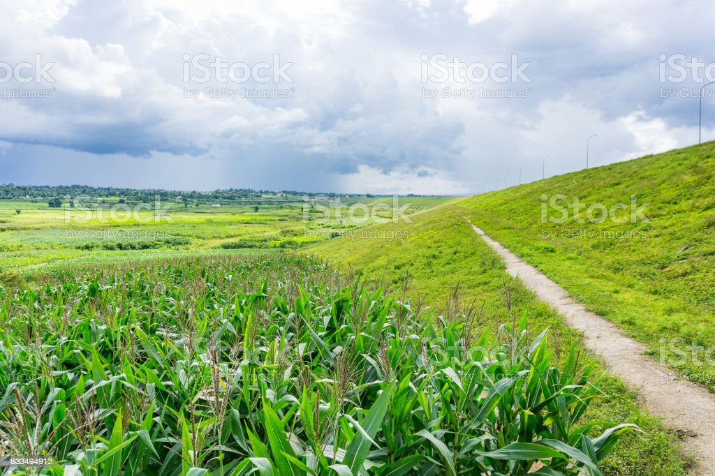 Road in country side stock photo