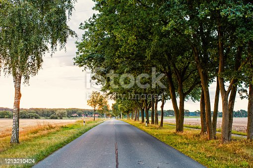 istock Road in field accompanied by row of green trees, skyline and nature on background. Landscape of flat terrain at sunset. Road looks alluringly to wanderlust. Roads and travels concept 1213210424