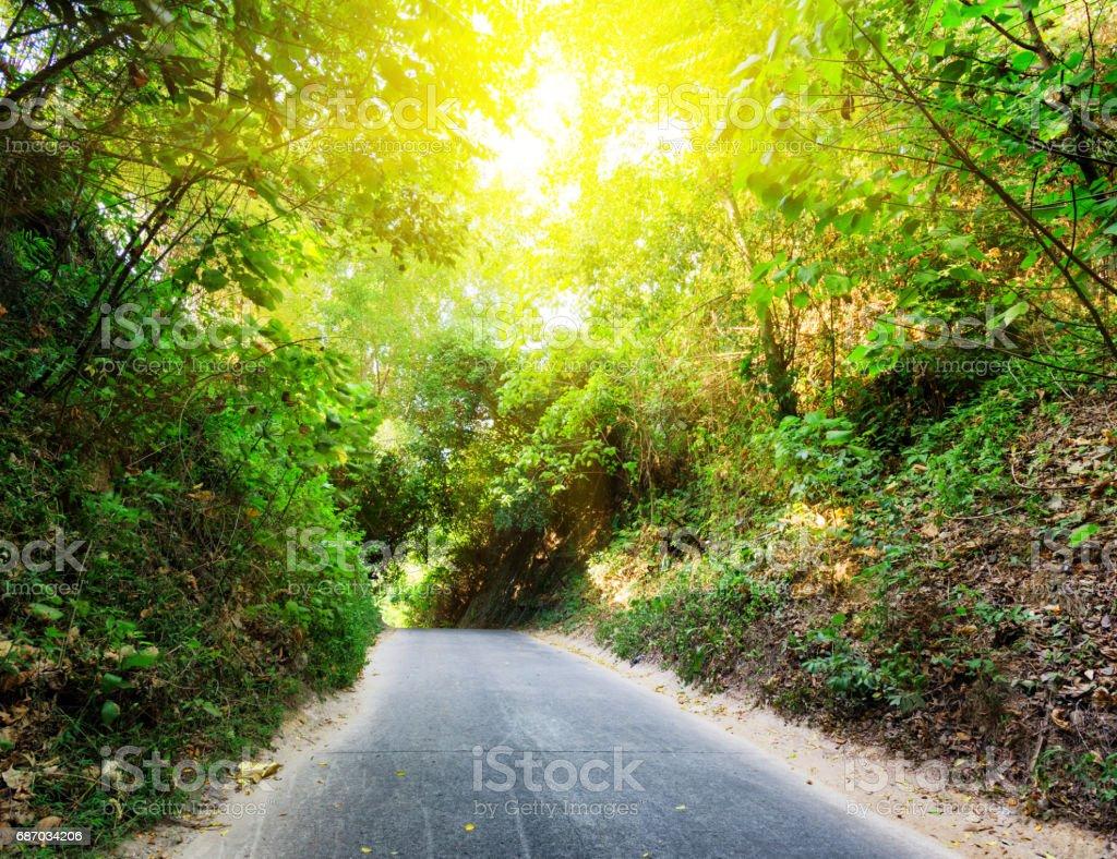Straße in Wald während dem Sonnenuntergang Lizenzfreies stock-foto