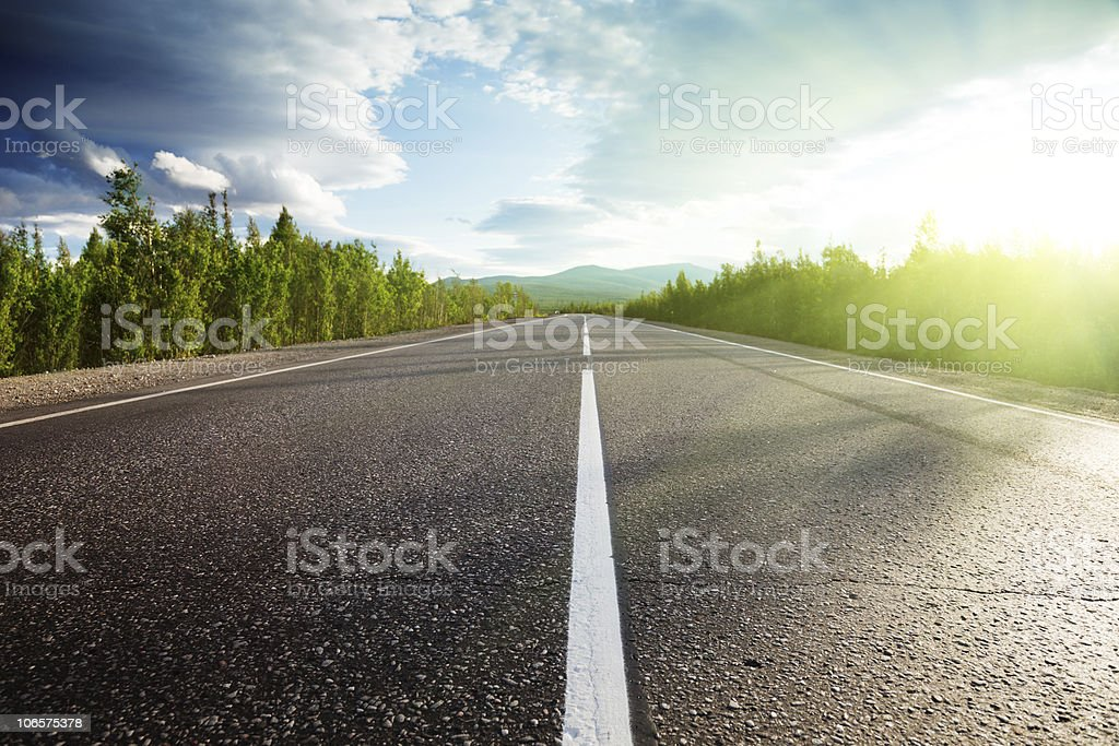road in forest royalty-free stock photo