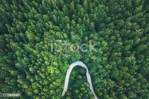 istock Road In Forest 1173543481